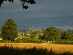 jul2010 31st oak trees dark sky (rospix) Tags: uk trees light summer sky cloud tree nature weather wales clouds landscape countryside oak hill july 2010 rospix