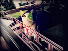 cat in the room (som300) Tags: cat housecat motorola zn5 cameraphone pet
