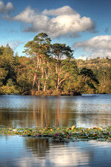 Tarn Hows (violinconcertono3) Tags: flowers trees england lake mountains nature water beautiful landscapes flickr unitedkingdom fineart lakedistrict cityscapes peaceful cumbria lillies idyllic waterlillies pinetrees fineartphotography davidhenderson tarnhows fineartphotographer londonphotographer 19sixty3 19sixty3com