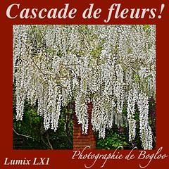 LUMIX LX1 (bogloo) Tags: me2youphotographylevel1