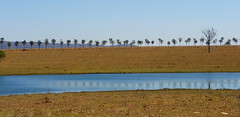 Between the Lines (osvaldoeaf) Tags: blue trees brazil sky lake nature water brasil reflections river landscape desert goinia palmiers gois