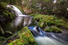 Haweswater Beck (Buckles Photos) Tags: longexposure tree water leaves waterfall rocks lakes lakedistrict cumbria