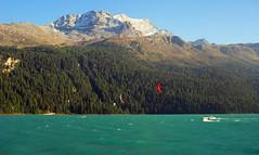 Aquiloni Sotto il Bernina (Wrinzo) Tags: mountain lake lago switzerland svizzera kitesurf montagna engadin bosco silvaplana engadina bernina lej silvaplauna