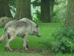 """Longleat Safari Park • <a style=""""font-size:0.8em;"""" href=""""http://www.flickr.com/photos/81195048@N05/8017576288/"""" target=""""_blank"""">View on Flickr</a>"""