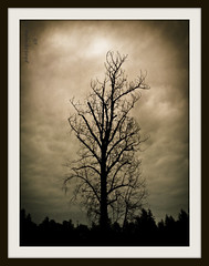 witchinghour (BettieBlu) Tags: trees sepia forest dark scenery moody bc dusk bettieblu