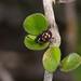 Pentatomomorph Bugs - Photo (c) Jon Sullivan, some rights reserved (CC BY-NC)