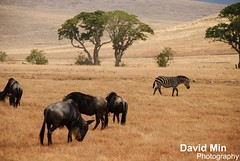 Ngorongoro Crater, Tanzania (GlobeTrotter 2000) Tags: africa camera lake elephant tourism animal tanzania photo big quiet peace 5 wildlife lion conservation visit safari ngorongoro leopard crater jungle area zebra tropic simba rhinoceros arusha manyara tarangire andbuffalo