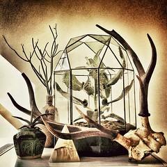 Still Death (Ken Marten) Tags: cactus stilllife cacti vintage square succulent stag pyramid stainedglass retro antlers squareformat bones trophy interiordecoration terrarium succulents onyx styling wardiancase terrariums wardian kalenchoe iphoneography instagramapp uploaded:by=instagram