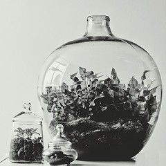 Family (Ken Marten) Tags: blackandwhite fern london vintage square moss retro squareformat terrarium terrariums hermetica kenmarten iphoneography instagramapp uploaded:by=instagram hermeticalondon