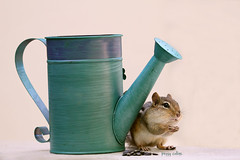 Don't Worry, Be Happy (Peggy Collins) Tags: sad chipmunk worried worry wateringcan lostinthought chipmunks peggycollins