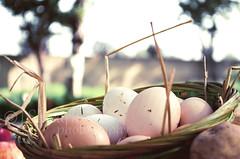 Eggs (J.Slusark) Tags: food rural farm live objects eggs chicks items cibo oggetti vita mangiare uova fattoria rurale pulcini