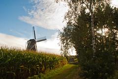 Path next to the mill, Zwiep (kawong12) Tags: holland mill landscape nederland landschap dutchlandscape gelderland deachterhoek zwiep