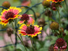 Bienen im Herbst 03.09.2012