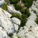 Nico - Calanques (ANP/AJNF/CSL) - 063