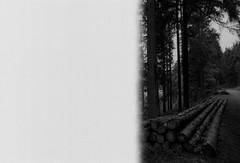 (.sxf) Tags: trees summer blackandwhite film analog forest landscape scenery canonae1 expired wald schwarzwald blackforest schwarzweis kodakprofessionalbw400cn firstofroll vivitar17mm35mc
