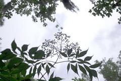 where we meet. (darionuve) Tags: alignment nature placement composition distance perception