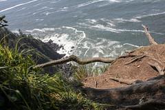 oregon (24 of 147) (SPLTImage Inc.) Tags: oregon trip travel vacation waterfalls ecola coast westcoast nature naturephotography