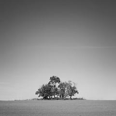 Antennas (derkleinebiber) Tags: landscape minimalist minimalism trees group blackandwhite simple emptiness fields sky himmel minimalismus landschaft brandenburg 6d eos6d 50mm square
