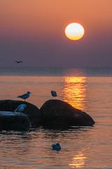 Mowen im Sonenaufgang (lindner.photography) Tags: landscape sunrise sea ocean birds sun water reflection