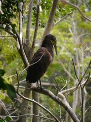 P2230364 (Gareth's Pix) Tags: aviarionacionaldecolombia baru colombia aviario bird