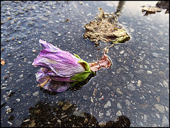 Inizio autunno (ninin 50) Tags: lesfleursmortes autunno tristezza fiori ninin