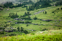 On the road to Hidden Lake (michaelraleigh) Tags: 200mm landscape f28l range highquality mountains canon pinetrees trees national glacier beautiful unitedstates secluded serene canoneos5dmarkii outdoors green montana park mountain field
