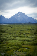 Moose Country 1 (Marisa Sanders Photography) Tags: tetons grandtetons thegrandtetons nps np gtnp grandtetonnationalpark canon canon7d explore outdoors outside gtfoutside gtfoutdoors landscape photography