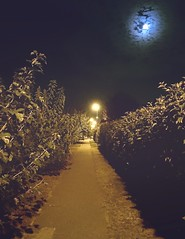 Street Night 2 (kovacskrisztianhu) Tags: veszprm hungary night iphoneshoot