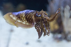 Oceanogrfic (Pablo Rodriguez M) Tags: valencia espaa spain acuario aquarium oceanogrfic