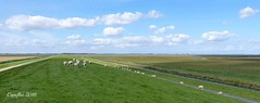 De dijk bij de Dollard. (Cajaflez) Tags: dollarddijk schapen sheep green groen cycleroad fietspad clouds wolken panorama weids