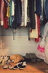 A Look in the Closet (Brooke_Morgan) Tags: blue girls sleeping ballet white girl fashion shirt cat closet clothing shoes colorful pretty dress boots tabby kitty blouse clothes flats shirts purr vans wardrobe dexter tomcat fashionable tabbycat knockoffs balletflats brookescamera