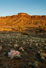 Mt Chambers at Dusk (Laszlo Bilki-Time Poor) Tags: red mountain nikon desert dirt outback d200 southaustralia mtchambers landscapegammonranges