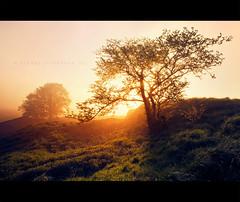 Changing (Stuart Stevenson) Tags: uk autumn trees light mist backlight sunrise photography scotland glow hss filteredlight clydevalley canon1740mm thanksforviewing canon5dmkii stuartstevenson ©stuartstevenson changinseasons