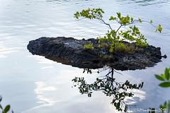 Vida sobre la roca (VicenteJ) Tags: rivieramaya verano2012