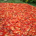 Chillies laid out to dry in Kompong Cham, Cambodia