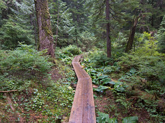 These planks are slippery when wet (Urban Disturbance) Tags: usa washington hiking pacificnorthwest mountainloop ashlandlakes