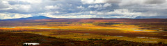 Tundra 5 (Ed Boudreau) Tags: red green water grass yellow alaska clouds golden flora scenic