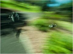 Under Attack (Brian Aston) Tags: blur green birds nikon australia queensland magpie botanicalgardens peewee aston icm toowoomba d90 intentionalcameramovement brianaston whiptail2011 d90nikonbrian