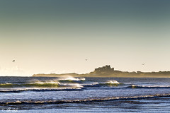 A Happy Place (Chris Lishman) Tags: seagulls seascape castle coast flying ross waves peace tide peaceful northumberland coastal soaring bamburgh tidal rolling tides clearsky crashing bamburghcastle rosssands chrislishman wideopens
