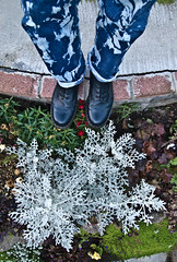 Plants, Denim, Doc Martens. . . (CWhatPhotos) Tags: garden plants cwhatphotos artist artistic olympus epl1 four thirds digital camera 1442mm zoom lens 8 hole doc docs doctor marten martens air wair airwair bouncing soles original eos close up boots boot drmartens docmartens dms adobe lightroom cushion sole yellow stitching yellowstitching foot photo photos picture pictures with that have dr comfort cushioned wear feet foto fotos which contain footwear photography light navy blue z welt vdmsole vdm tie dye dyed denim jeans drmarten flickr