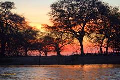 Quarta-sunset (sonia furtado) Tags: sunset brazil sol brasil contraluz pantanal pds rioclaro silhuetas poconé centrooeste quartasunset nanaturezainnature