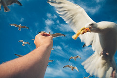 Sea Gull grabbing chips (lomokev) Tags: blue england sky food seagulls bird canon eos seaside brighton arm feeding unitedkingdom seagull beak chips chip 5d canoneos5d file:name=120728eos5d9509