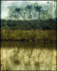 Tree by the River (Bozze) Tags: sweden wwwoppnahorisonterse wwwopenhorizonsfinearteu