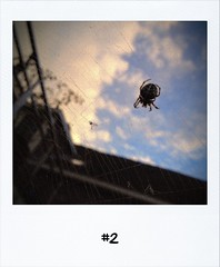 "#DailyPolaroid of 30-9-12 #2 • <a style=""font-size:0.8em;"" href=""http://www.flickr.com/photos/47939785@N05/8054087537/"" target=""_blank"">View on Flickr</a>"