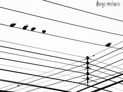Mirando pa'l cielo (DiegoMolano) Tags: blancoynegro contraluz cables wires contraste palomas bnw doves cruzadas ltytr2 ltytr1 ltytr3 cruzadasii cruzadasi