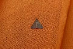 Pending (dhobern) Tags: india october hyderabad 2012 gachibowlistadium geocode:accuracy=13 geo:lat=174469 geo:lon=783439