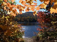 Plongeon dans la nature. Diving in nature (Amiela40) Tags: autumn nature leaves automne path couleurs trail beaut marche feuilles magie merveille sentiers parcdelamauricie parcnationaldelamauricie lamauricienationalpark randonnne treesdiestandingup lequbecetsesparcsnationaux
