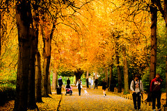 Golden walk (Steve-h) Tags: park autumn trees ireland ladies girls dublin orange baby brown black color colour men green art fall tourism nature boys colors leaves yellow photoshop canon walking eos gold design women europe colours zoom walk tourists telephoto adobe cameras pedestrians handheld recreation citycenter bushes f8 citycentre aerlingus pram fallenleaves lightroom spotmetering ststephensgreen youths recreational thegreen aperturepriority steveh iso2000 1250sec 100mm400mm canoneos5dmkii canoneos5dmk2 bestcapturesaoi lightroom42 adobephotoshoplightroom42 canonadobephotoshoplightroom