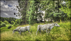 Burghley Cattle Sculptures (Darwinsgift) Tags: burghley house grounds estate gardens sculpture stamford lincolnshire carl zeiss 35mm distagon f2 t zf 2 nikon d810 photomatix pro 5 hdr cambridgeshire