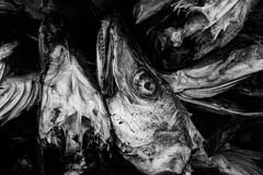 Guano (Bente Nordhagen) Tags: sakrisy lofoten guano fishheads blackandwhite cod torsk